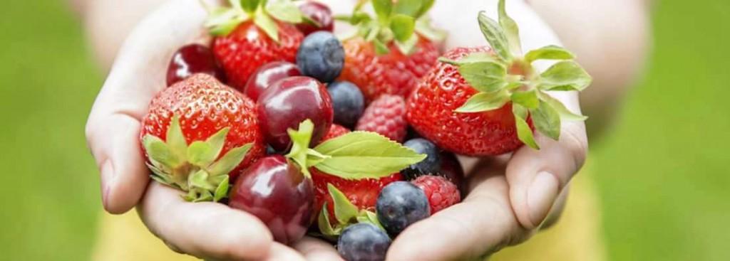 früchte hand